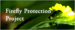 Firefly Protection Project