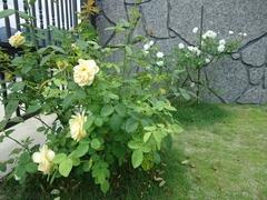 Beautiful Osato Laboratory garden even in the heat of summer