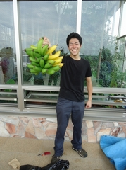 Second bunch of bananas harvested in our greenhouse