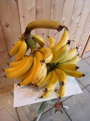 Third bunch of bananas harvested in our greenhouse