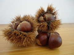 A synonym for autumn, harvest of chestnuts