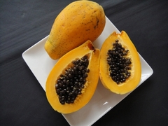Papaya tree loaded with fruits