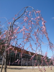 Declaration of Flowering