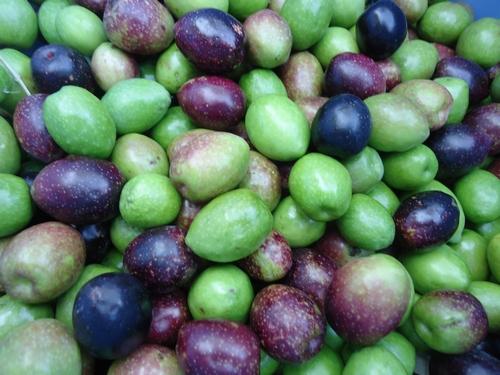 Olive-013.JPG