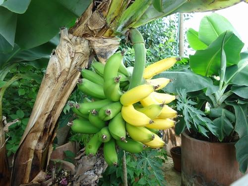 banan-017.JPG