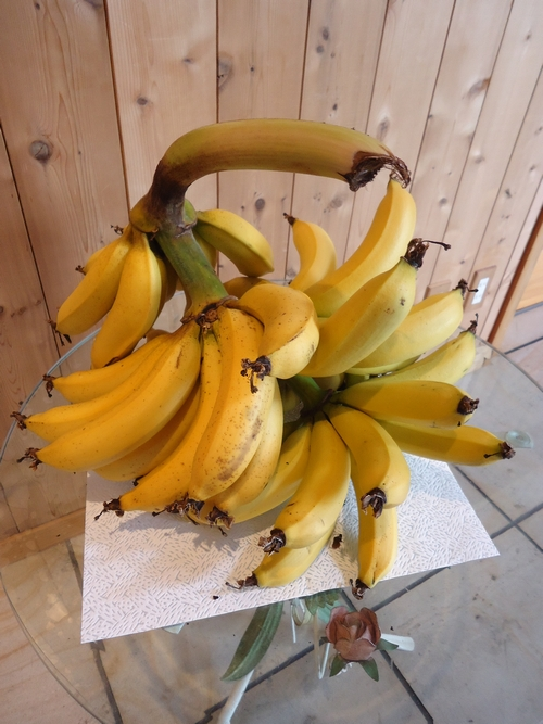 banana-020.JPG