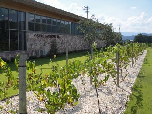 grape-020.JPG