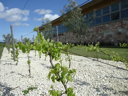 grape-031.JPG