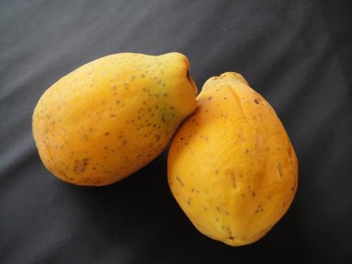 papaya-017.JPG